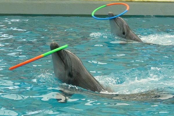 Воспитанники дома ребёнка г.Черкесска посетили дельфинарий